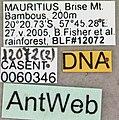 Solenopsis mameti casent0060346 label 1.jpg