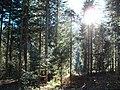 Sommerlicher Herbst Herrenstuhl - panoramio (2).jpg