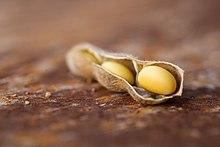 enzym i sojabönor