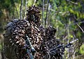 Special forces Military of Russia 01.jpg