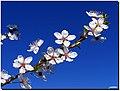 Spring's flowers - panoramio.jpg