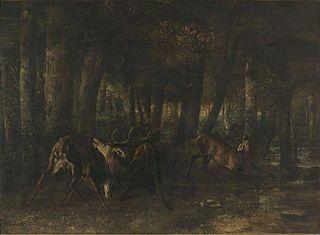 Le Rut du printemps. Combat de cerfs
