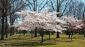 Spring at Eisenhower Park (39849024620).jpg