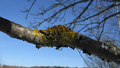 Spring lichens 02.png
