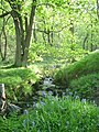 Spring time in Shining Cliff Woods - geograph.org.uk - 506157.jpg