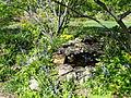Springtime in Bartholdi Park - Washington, DC - DSC09435.JPG