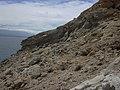 Starr-050404-0043-Schinus terebinthifolius-habit-Mokeehia-Maui (24741480615).jpg