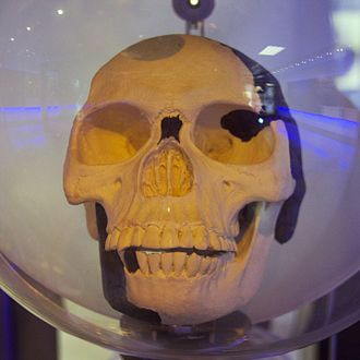Piltdown Man - A replica of the Piltdown Man skull.