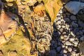 Stone on the beach of Le Tilleul, Normandy-8337.jpg