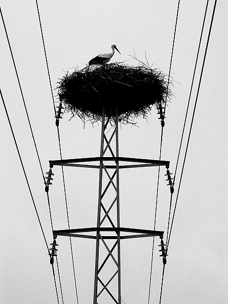 File:Stork nest on power mast.jpg