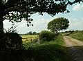 Straight track between fields - geograph.org.uk - 460149.jpg