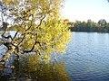 "Straussee - ""Springbrettbaum"" (""Springboard Tree"") - geo.hlipp.de - 29660.jpg"