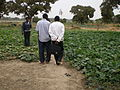 Students carrying out surveys with gardeners - Les étudiants faisant des enquétes aupres des agriculteurs (3266239335).jpg