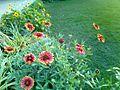 Sunflower image5.jpg