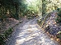Sunken Track at Acres Down. - geograph.org.uk - 369677.jpg