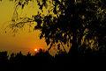 Sunset at Çukurova University 02.jpg