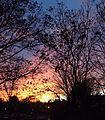 Sunset in NJ wintertime bare trees many colors parking lot.JPG