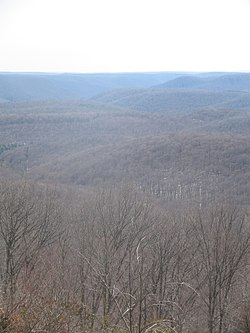 Susquehannock State Forest View.jpg