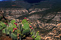 Sycamore Canyon (5016086514).jpg