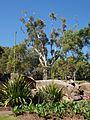 Sydney Royal Botanic Gardens (05).jpg
