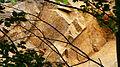 Tännichtgrund Oberwartha 20.JPG