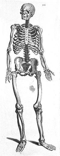 T. Bartholin, sceleton Wellcome L0007873.jpg