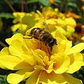 TANAKA Juuyoh - Bee (by).jpg