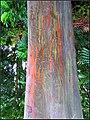 TREES (7791497458).jpg
