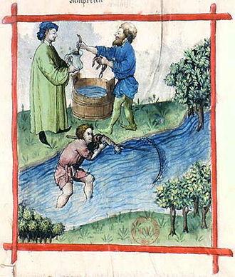 History of seafood - Fishing lamprey in a stream; Tacuinum Sanitatis, 15th century