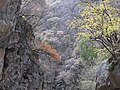 Taiping Forest Park 太平森林公园 (5219745854).jpg