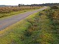 Tarmac track across Black Down, New Forest - geograph.org.uk - 184370.jpg