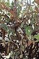 Tenerife cactus.jpg