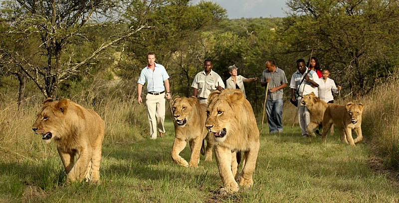 Walking Safari in South Africa