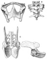The Osteology of the Reptiles p146.png