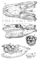 The Osteology of the Reptiles p73.png