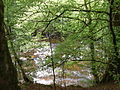 The River Braan - geograph.org.uk - 50588.jpg