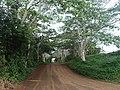 The Road to Secret Beach (8727102647).jpg