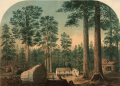 The mammoth trees (Sequoia gigantea), California (Calaveras County) executed in oil colors by Middleton, Strobridge & Co., Cin. O. 03140u.png
