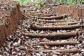 The steps made to walk in the Forests of karnataka.jpg