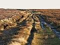 The track to Stobb Cross (2) - geograph.org.uk - 692303.jpg