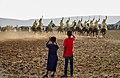 The value of Heritage - TBOURIDA Festival at Ouled Ghziel village 2 - Jerada Morocco by Brahim FARAJI.jpg