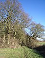 Three Shire Bridleway and the Fir Tree Planting - geograph.org.uk - 297991.jpg