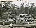 Timber Mill (2623004251).jpg