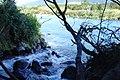 Tongariro River (10).JPG