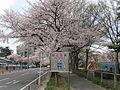 Toyokawa SakuraTunnel entrance.jpg