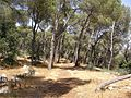 Trail around the the top of har tavor - panoramio.jpg