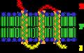 Transmembrane receptor.png