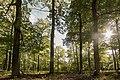 Traubeneichenwald in der Rochauer Heide.jpg