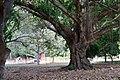 Tree (143205025).jpeg