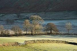 Trees alongside Trout Beck (geograph 3759901).jpg